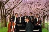 Mandelblüten-Frühlings-Konzert