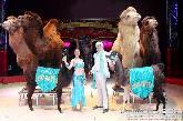 Circus Salto präsentiert den großen Weihnachtscircus in Wuppertal