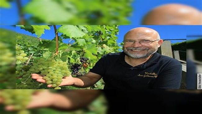 Kleine Weinbergwanderung - mit moderierter 4-Weinprobe durch die Radebeuler Weinberge für 2h