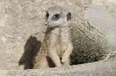 Zuhause im Zoo - wie lebst denn du?