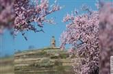 Frühlings-Genusstour mit Mandeln & Wein - -